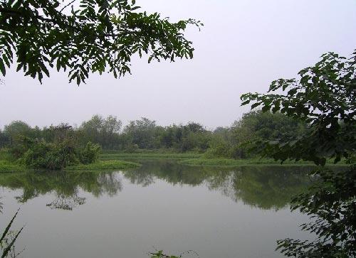 杭州西溪国家湿地公园 一曲溪流一曲烟