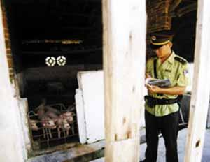 蕉岭监狱以前还有负责养猪的狱警