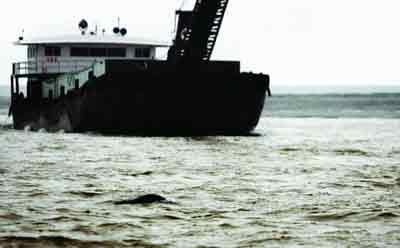 1月7日,洞庭湖,一条江豚游出水面换气,江豚后面是运输的船舶。近年来,由于人为因素的影响江豚在不断减少。 图/记者华剑