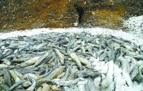 20万公斤水养鲇鱼一夜之间死亡