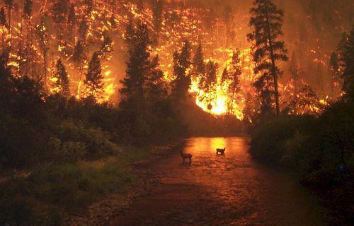智利南部森林火灾过火面积已超过1.8万公顷