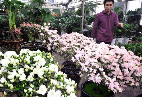 组图:市民在乌鲁木齐市明珠花卉市场选购鲜花