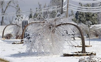 被冰雪压断的树木