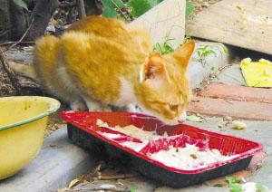 一些市民留下的残羹剩饭,成为流浪猫的主要食物(记者 赵健鹏 摄)