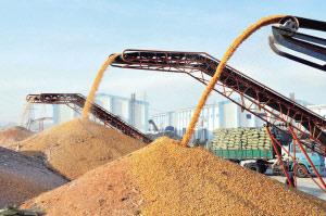 中国粮食已连续五年增产(资料图片) 新华社