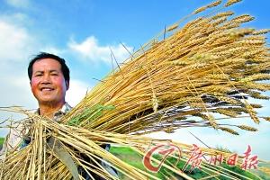 种粮有钱赚,农民才有积极性。CFP供图