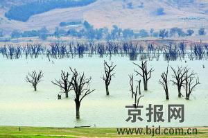 """澳水库淹没在湖水中的植物""""旱""""出水面。"""