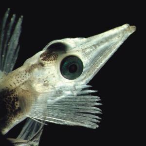 科学家新发现一批海底新奇生物(组图)