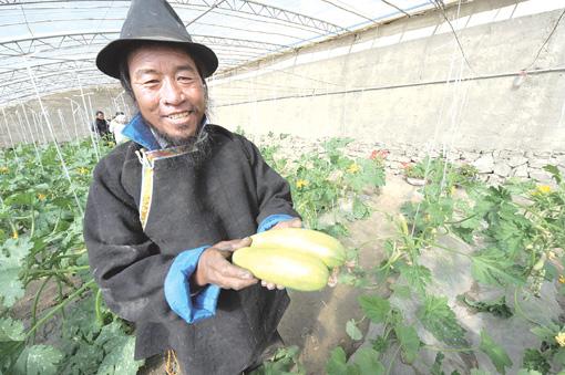金良/图为西藏白朗县一位藏民摘下自家大棚种植的西葫芦 新华社记者金...
