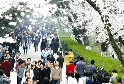 1.武汉大学:樱花大道显浪漫