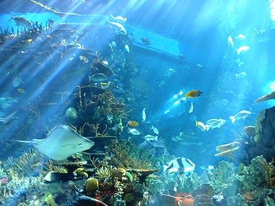 海洋馆景观