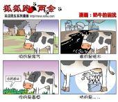 漫画:奶牛的困扰