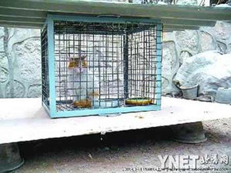 网友拍到笼子里的一只被抓小猫
