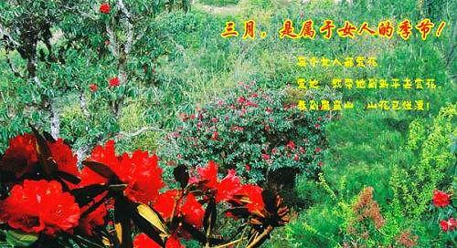 最佳目的地推介:磨盘山国家森林公园、戛洒花街