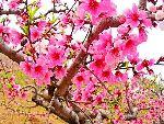 平谷赏桃三种特色模式