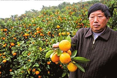 汇源上游基地项目叫停后,当地果农可能面临一场危机。图/CFP