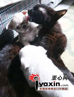 猫妈妈经常给狗孩子洗澡。本网记者 李远新 摄