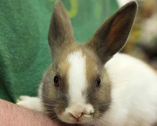 壁纸 动物 兔子 550_439
