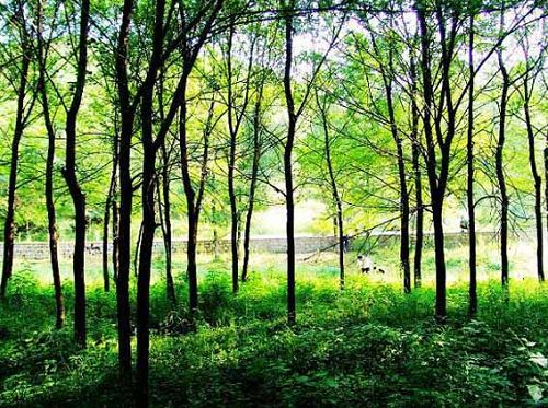4、喇叭沟门原始森林公园