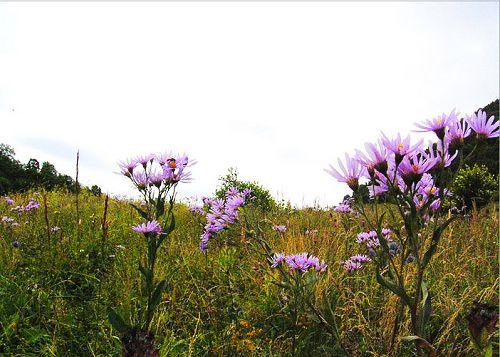 周边景点:百花山自然保护区