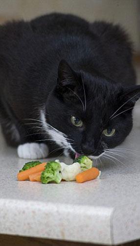 名叫但丁的猫享用吃水果和蔬菜