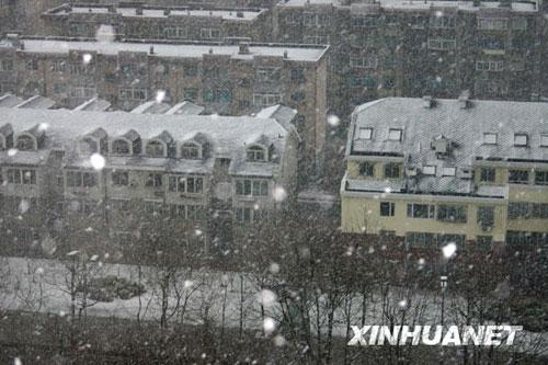 4月15日早晨,纷纷扬扬的雪花从天而降。