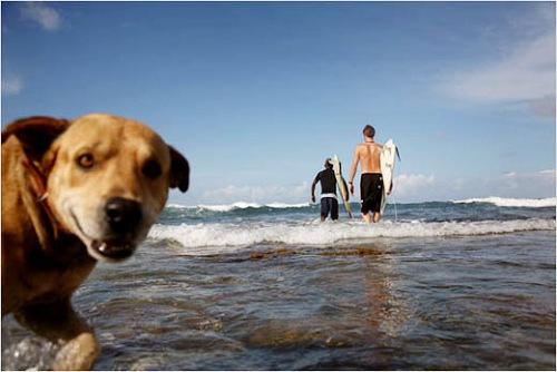 海浪一浪高过一浪,直逼海岸附近。小狗也耐不住寂寞,跟随人群涌向海浪。
