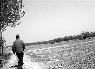 4月16日,灵宝市大王镇被清理后的苹果园。当地政府出台措施,在规定时间内清理地上附着物的村民,将获得3%的奖励,大部分村民清理了土地,只剩下少数人家的苹果树。图/记者薛小林