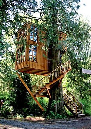 住在全球最疯狂的树屋