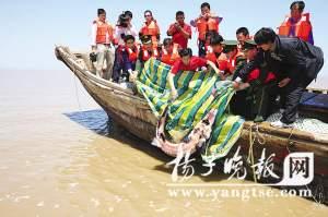 中华鲟被放归大海