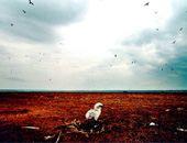 2009,中国环保十大拷问