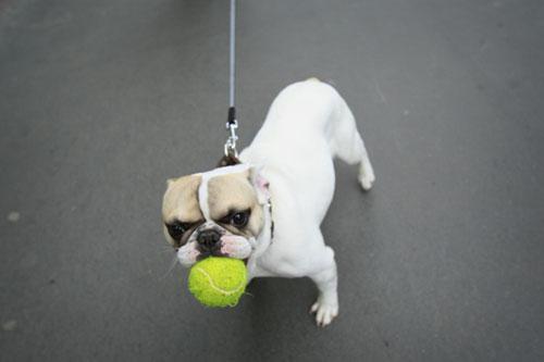 动物 狗 狗狗 500