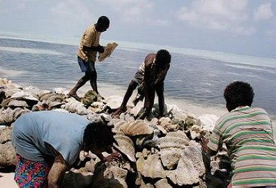 岛民把捡拾来的贝壳筑坝
