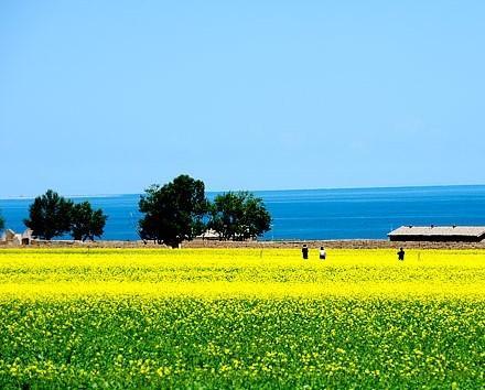 迷人的青海湖