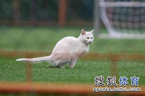 01白猫惊现训练场
