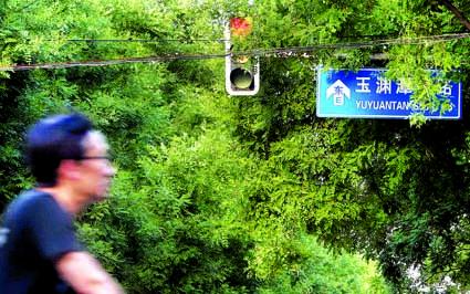 图为路口的红绿灯被茂密的枝叶遮挡