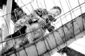 """黑龙江省军区军犬训练队军犬5秒拉响""""炸药包"""""""