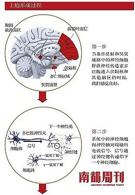 毒品上瘾行程过程(1、2)