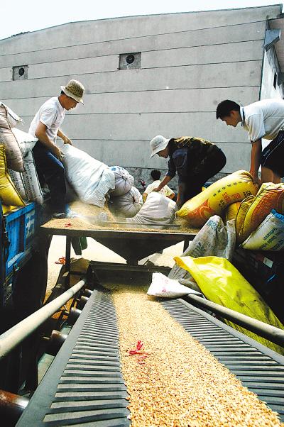 粮食市场价格涨速快 部分地方农户观望惜售(图)图片