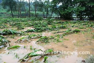 田地被淹 网友供图
