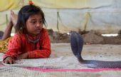 印度小孩,拿毒蛇当玩具(组图)