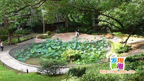 香港大学荷花池――电影《玻璃之城》取景地之一