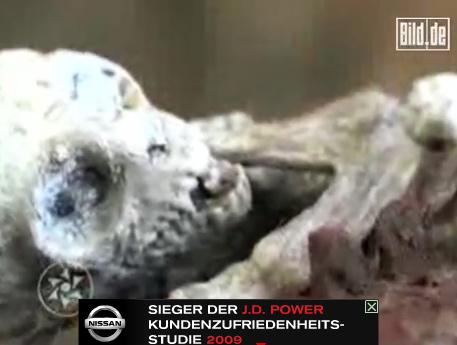 外星人宝宝尸体被制成标本