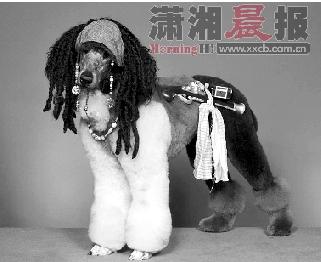 """夺冠小狗:""""约翰尼・德普有我帅吗?他有我这忧郁的眼神吗?"""""""