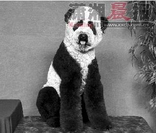 """大熊猫小狗:""""好热啊,还得涂黑眼圈,容我吐个舌头凉快会儿啊。"""""""