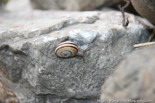 这是一只陇南灾区的蜗牛,它似乎不用发愁,如果每个人都像它一样,天生就带个房子就好了。王子恢摄