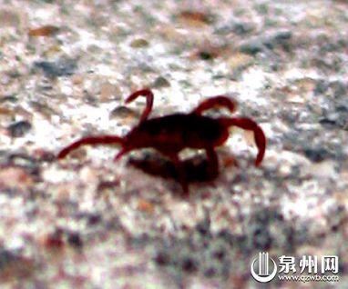 血 虫 住 日本 吸血