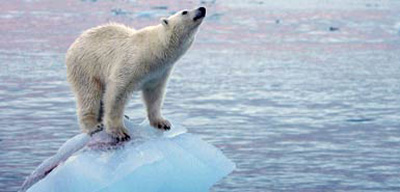 北极冰盖融化,北极熊栖身之地受到威胁