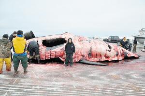 保罗与猎杀的鲸鱼