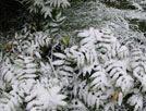 被雪压弯的植被
